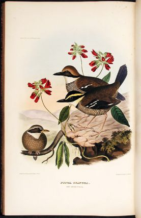 A Monograph of the Pittidae, or, Family of Ant Thrushes. New York: D. Appleton and Company, 1863....