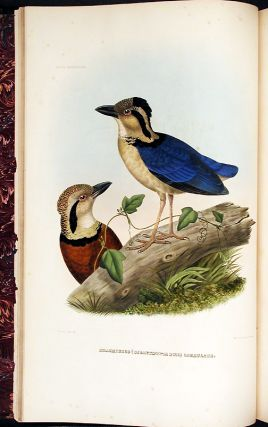A Monograph of the Pittidae, or, Family of Ant Thrushes. New York: D. Appleton and Company, 1863.