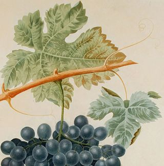 [Grapes] The Frankindale