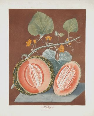 Melon] Scarlet Flesh Rock. After George BROOKSHAW