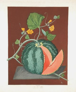 Melon] Silver Rock Melon. After George BROOKSHAW