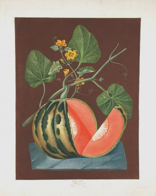 Melon] Polinac Melon. After George BROOKSHAW