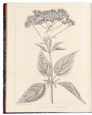 A Flora of North America, illustrated by coloured figures drawn from nature. William Paul Crillon...