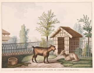[Set of four prints of animals in the 'Jardin des Plantes' in Paris]