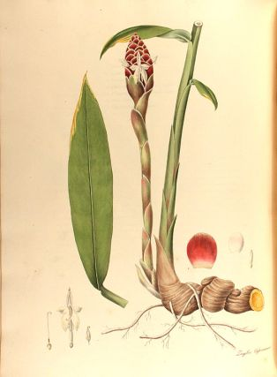 Monandrian Plants of the Order Scitamineae, chiefly drawn from living specimens in the Botanic Garden at Liverpool