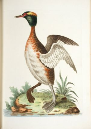 A Natural History of Uncommon Birds, and of Some Other Rare and Undescribed Animals