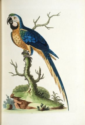 A Natural History of Uncommon Birds, and of Some Other Rare and Undescribed Animals. George EDWARDS