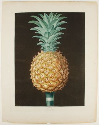 Pineapple] Black Antigua. After George BROOKSHAW