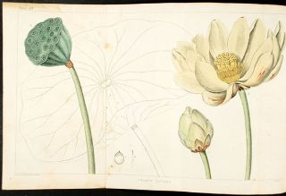 A Flora of North America. Illustrated by coloured figures, drawn from nature