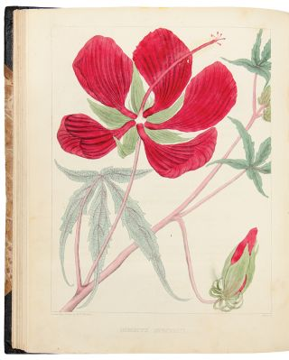 A Flora of North America. Illustrated by coloured figures, drawn from nature. William Paul...