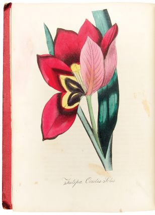 The American Flora, or History of Plants and Wild Flowers: containing a systematic and general description, natural history, chemical and medical properties of over six thousand plants, accompanied with a circumstantial detail of the medicinal effects, and of the diseases in which they have been most successfully employed
