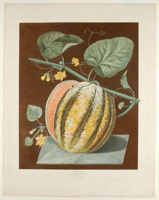 Melon] Scarlet Fleshed Romana Melon. After George BROOKSHAW