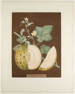 Melon] Cantaloupe Melon. After George BROOKSHAW
