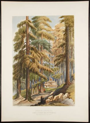 Cedrus Deodara, A Grove at Nachar near the Waterfall, from a drawing by the late Lady Canning...