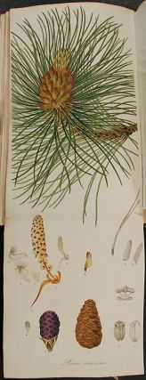 A Description of the Genus Pinus, with directions relative to the cultivation, and remarks on the uses of the several species: also descriptions of many other new species of the family Coniferæ