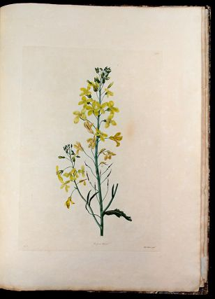 Select Specimens of British Plants. Strickland FREEMAN, Dr. George SHAW, - Charlotte STRICKLAND,...