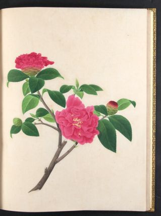 An album of original Chinese watercolours of flowering plants. Company School CHINA.