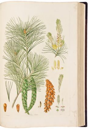 A Description of the Genus Pinus, with directions relative to the cultivation, and remarks on the uses of the several species: also descriptions of many other new species of the family Coniferae. Plates.