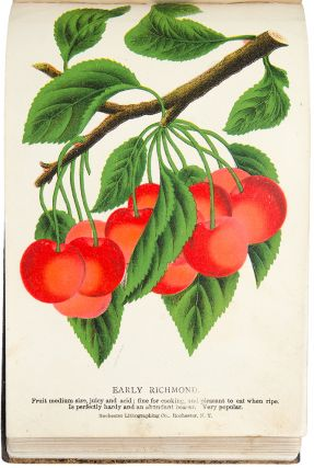 [A bound collection of coloured botanical specimen plates used as a seedsman's sample book]