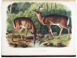 The Viviparous Quadrupeds of North America. John James AUDUBON, Rev. John BACHMAN