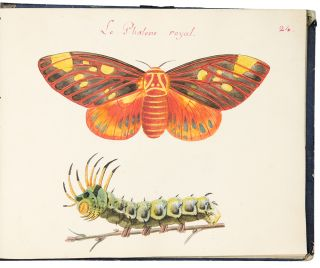 Album of watercolor drawings of butterflies and moths after Abbot, titled in manuscript:]...