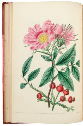 Rosarum Monographia; or, A Botanical History of Roses ... A new edition. John LINDLEY