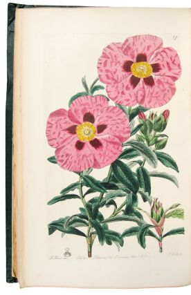 Cistineae. The Natural Order of Cistus, or Rock-Rose. Robert SWEET