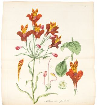 Exotic Flora, Containing Figures and Descriptions of New, Rare, or Otherwise Interesting Exotic...