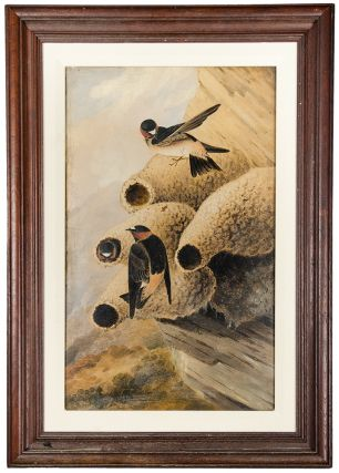 Republican Cliff Swallow. Joseph Bartholomew KIDD, after John James AUDUBON.