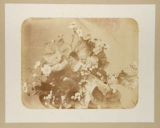 Album of 25 albumen photographs of flower arrangements
