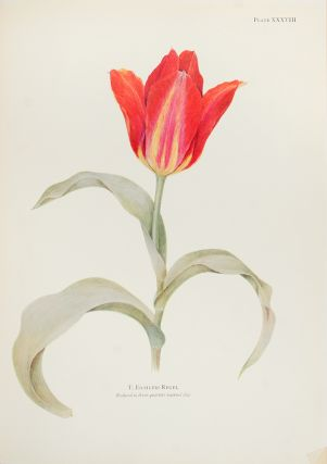 Notes on Tulip Species. William R. DYKES, E. Katherine DYKES, d. 1933