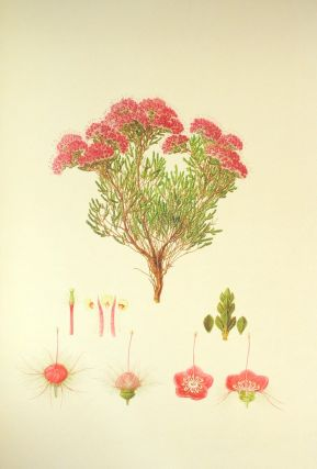 The Australian Flower Paintings of Ferdinand Bauer
