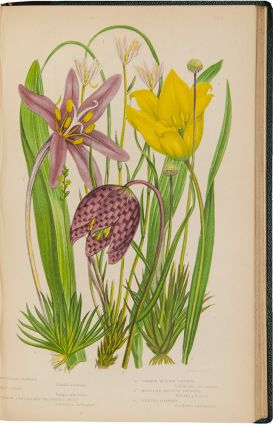 The Flowering Plants, Grasses, Sedges, and Ferns of Great Britain