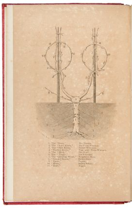 The Vine-Dresser's Manual, an Illustrated Treatise on Vineyards and Wine-Making. Charles REEMELIN