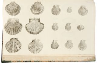 Catalogues of the birds, shells, and some of the more rare plants, of Dorsetshire. From the new and enlarged edition of Mr. Hutchins's history of that county ... With additions; and a brief memoir of the author