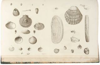 Catalogues of the birds, shells, and some of the more rare plants, of Dorsetshire. From the new...
