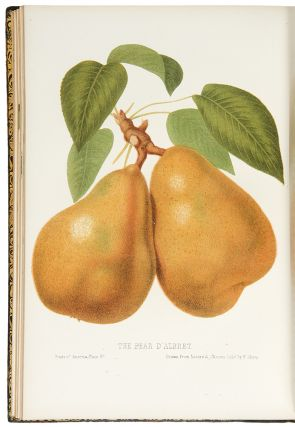 The Fruits of America, containing richly colored figures and full descriptions of all the choicest varieties cultivated in The United States
