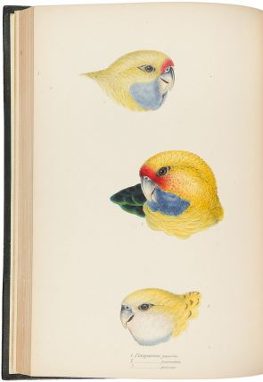 A Synopsis of the Birds of Australia and the Adjacent Islands. John GOULD