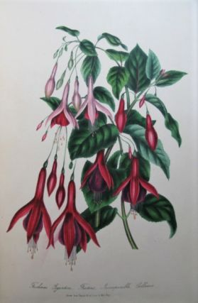 Choice Flowers: A Collection of Drawings of Favourite Flowers, from the Garden and the Conservatory