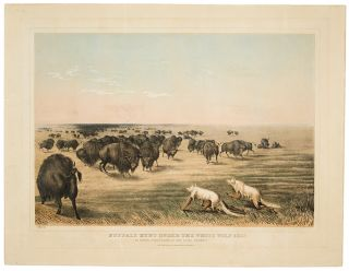 Buffalo Hunt under the White Wolf Skin. An Indian Stratagem on the Level Prairies. George CATLIN