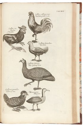 The Ornithology of Francis Willughby ... In three books. Wherein all the birds hitherto known ... are accurately described. Translated into English, with many additions. To which are added three considerable discourses, I. Of the art of fowling ... II. Of the ordering of singing birds. III. Of falconry. By John Ray