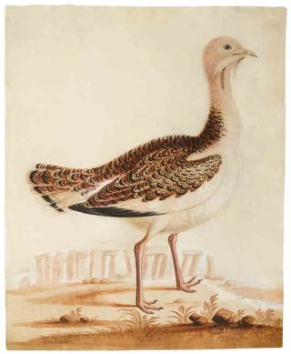 The Bustard Cock [and] The Hen Bustard ... [Pair of ornithological watercolours signed, depicting...