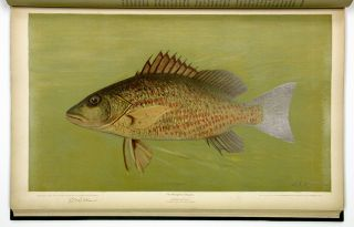 The Fishes of North America that are captured on Hook and Line. With eighty colored plates made from oil portraits of living fishes before their color tints had faded