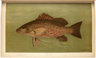 The Fishes of North America that are captured on Hook and Line. With eighty colored plates made...
