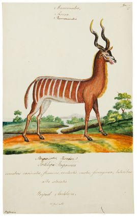 An extensive, life-time collection of 409 watercolor drawings of animals, each captioned with...