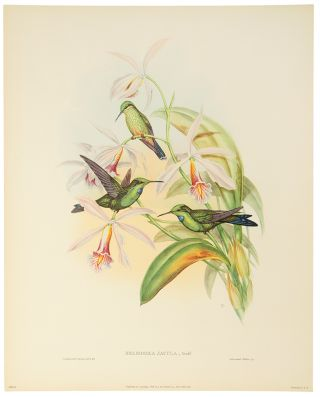 Six Full Color Prints Humming Birds. A Portfolio of Six Magnificent Color Prints. John GOULD