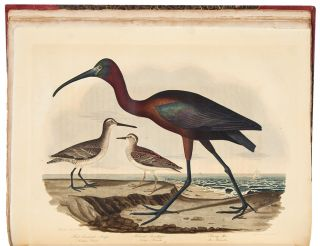 American Ornithology; or, the Natural History of Birds inhabiting the United States, not given by Wilson