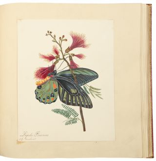 An album of drawings and watercolours of natural history and topographical subjects, and...