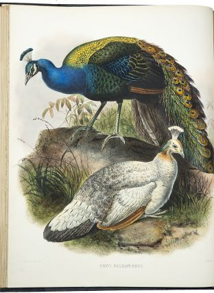 A Monograph of the Phasianidae or Family of the Pheasants. Daniel Giraud ELLIOT