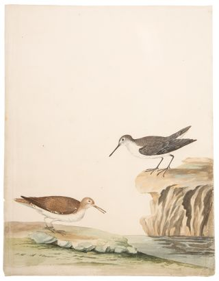 Sea Purse & Sand Piper. Peter PAILLOU